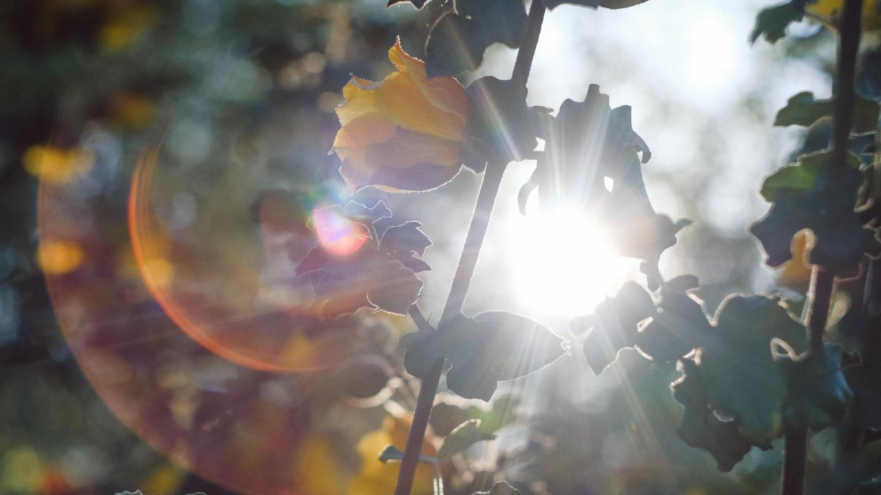 A Importância de Ser Lembrado de Que a Luz Nunca Para de Brilhar