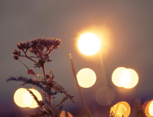 Servir à Luz
